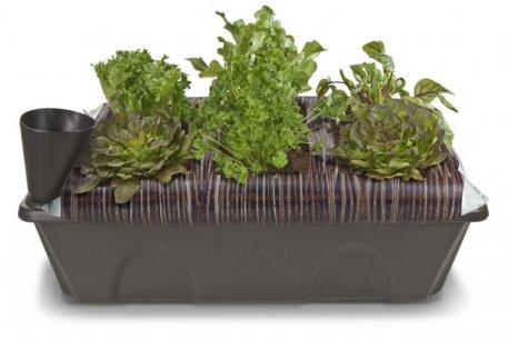 Biolan Self-watering box